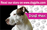 dogphx_ourstory